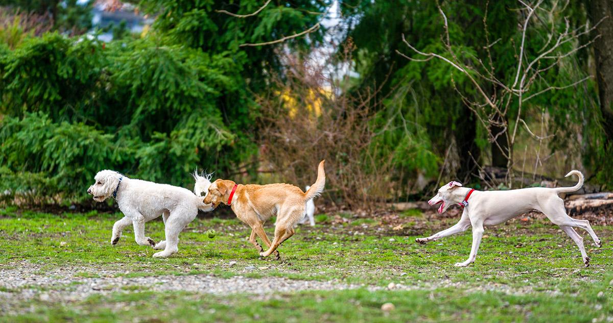 Destin & South Walton Dog Parks