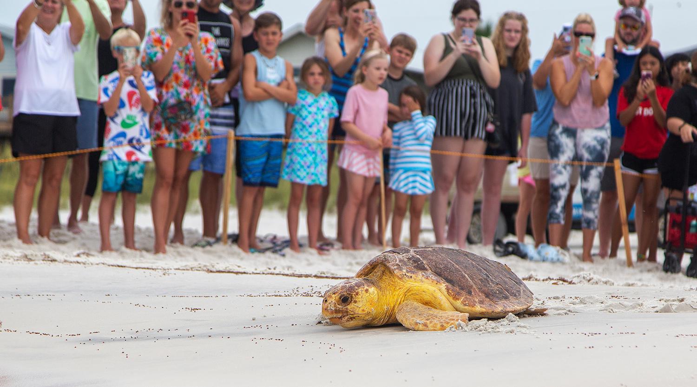 Florida Sea Turtle Release