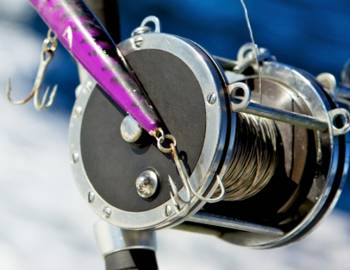 Fishing Reel: Fishing Boat Rentals Page Image