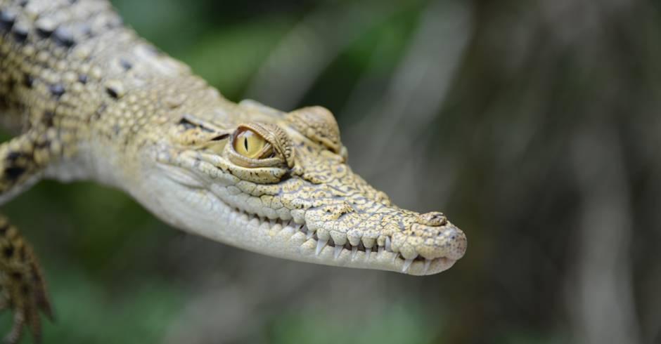 Alligators in Destin