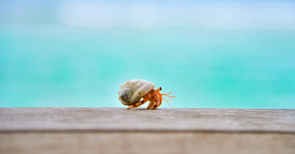Crabs in Destin