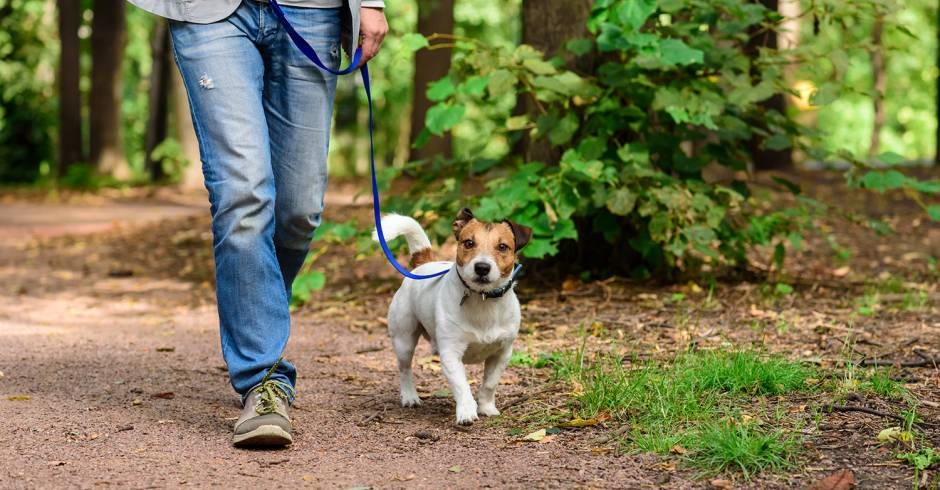 Dog Friendly Hiking