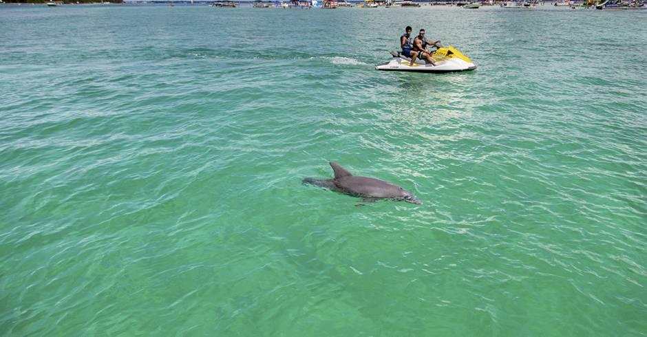 Destin Dolphins