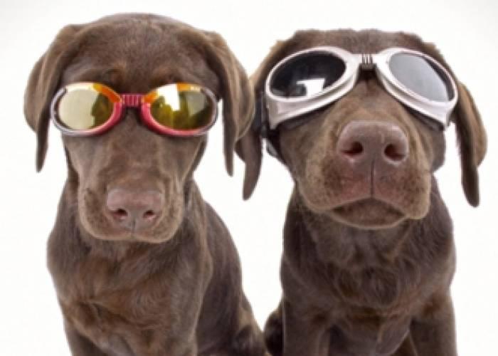 Destin Dogs